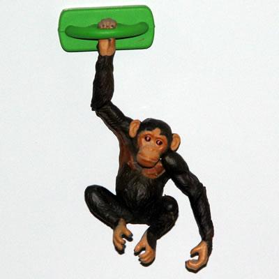 チンパンジーの画像 p1_5